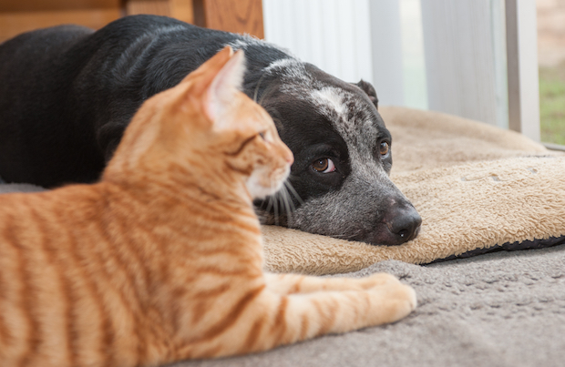 Cat and dog at home.