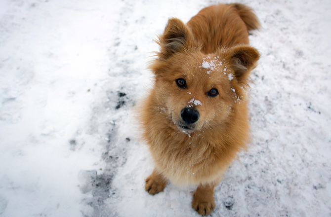 How to enjoy a snow day with your dog