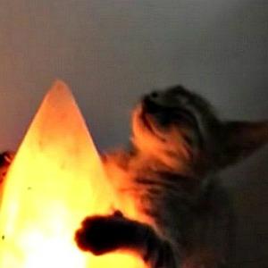 Cat hugging lamp.