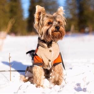 DIY dog boot camp