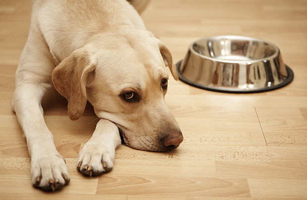 Dog vacation dangers: not eating
