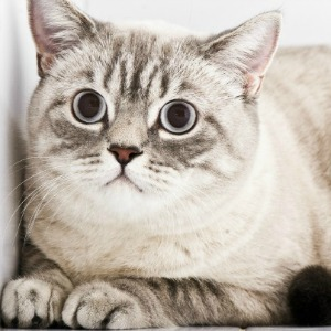 Scared cat with big eyes