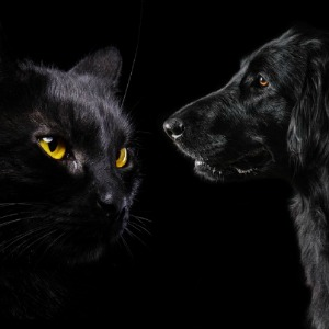 Black cat and black dog