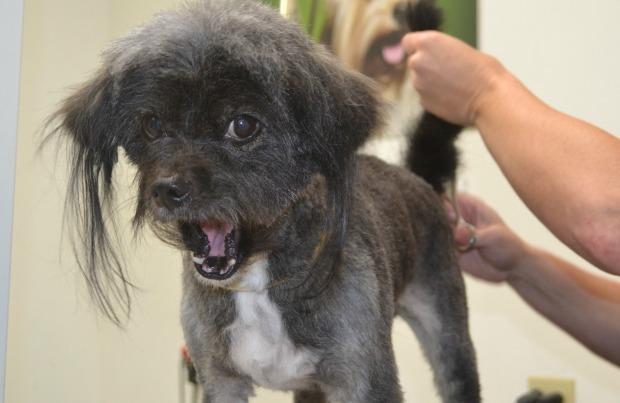 Neville gets groomed.