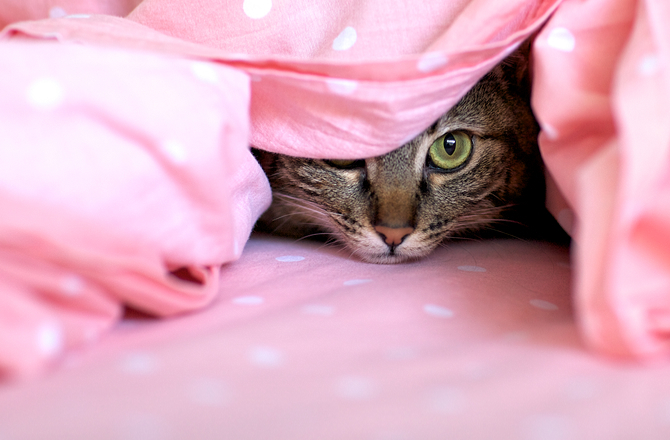 Cat hiding in bedding