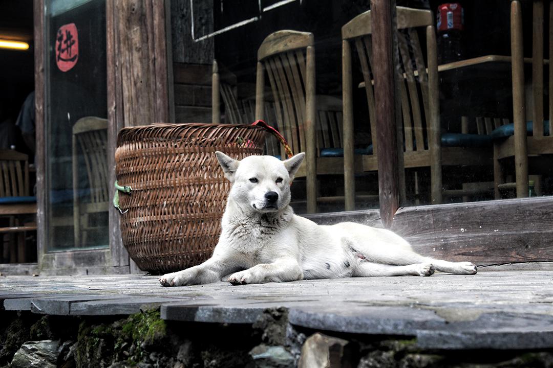 china20-dog.jpg