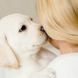 Woman holding Labrador puppy