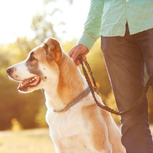 Man going on walk with dog