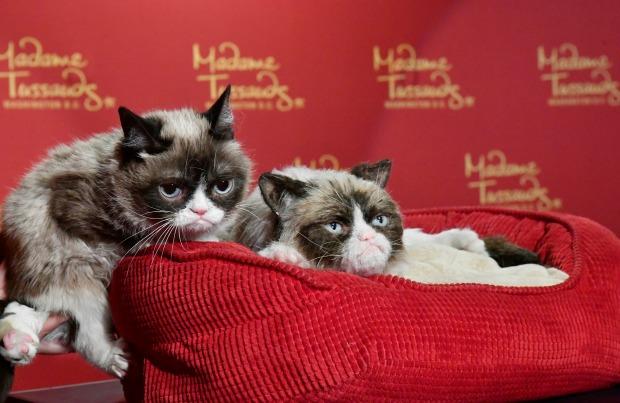 Grumpy Cat and Wax Figure Grumpy Cat