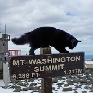 Weather cat at Mount Washington Observatory