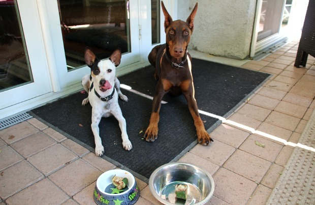 Dogs trying Dukes Zucchini Delight