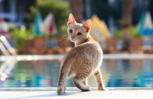 Cat near a pool