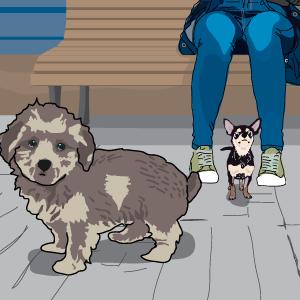 My dog, my kid, and me: a love triangle