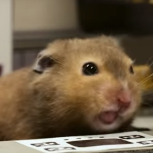 A clip from Hamsterfeld