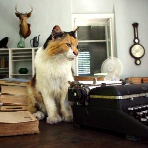 A cat sitting near Ernest Hemingway's typewriter