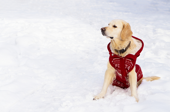 How to enjoy a snow day with your dog-stock up on supplies