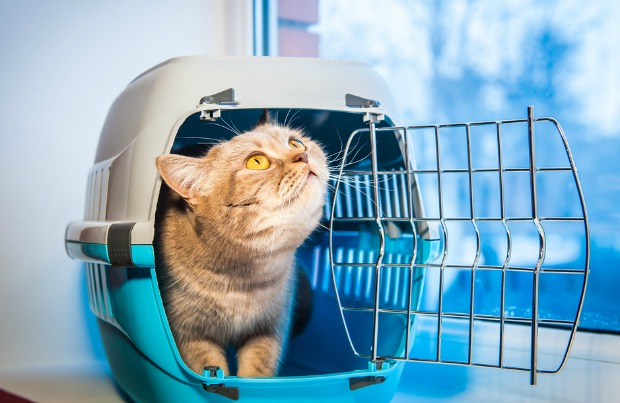 Cat in travel carrier