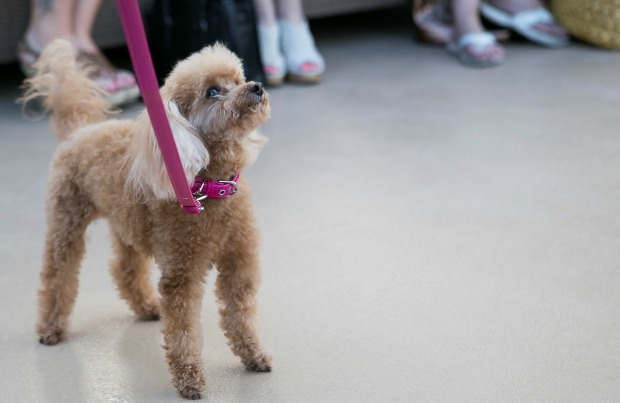 The funeral home dog turning grief into hope