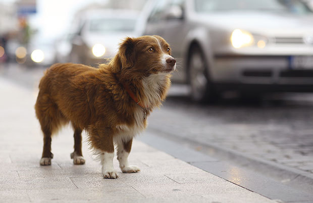 Dog vacation dangers: lost dog