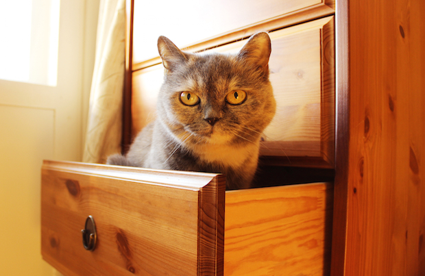 Cat hanging out in drawer
