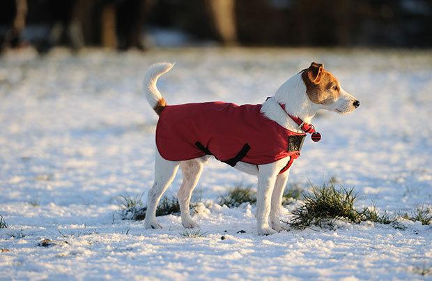 Dog-walking essentials: inclement weather gear