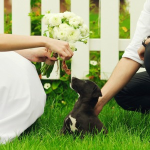Puppy at a wedding.