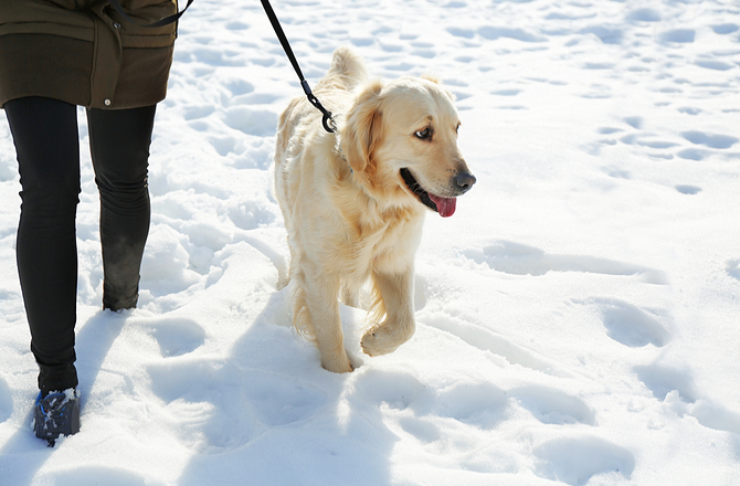 How to enjoy a snow day with your dog-prevent potty problems