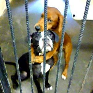 Shelter Dogs Hugging