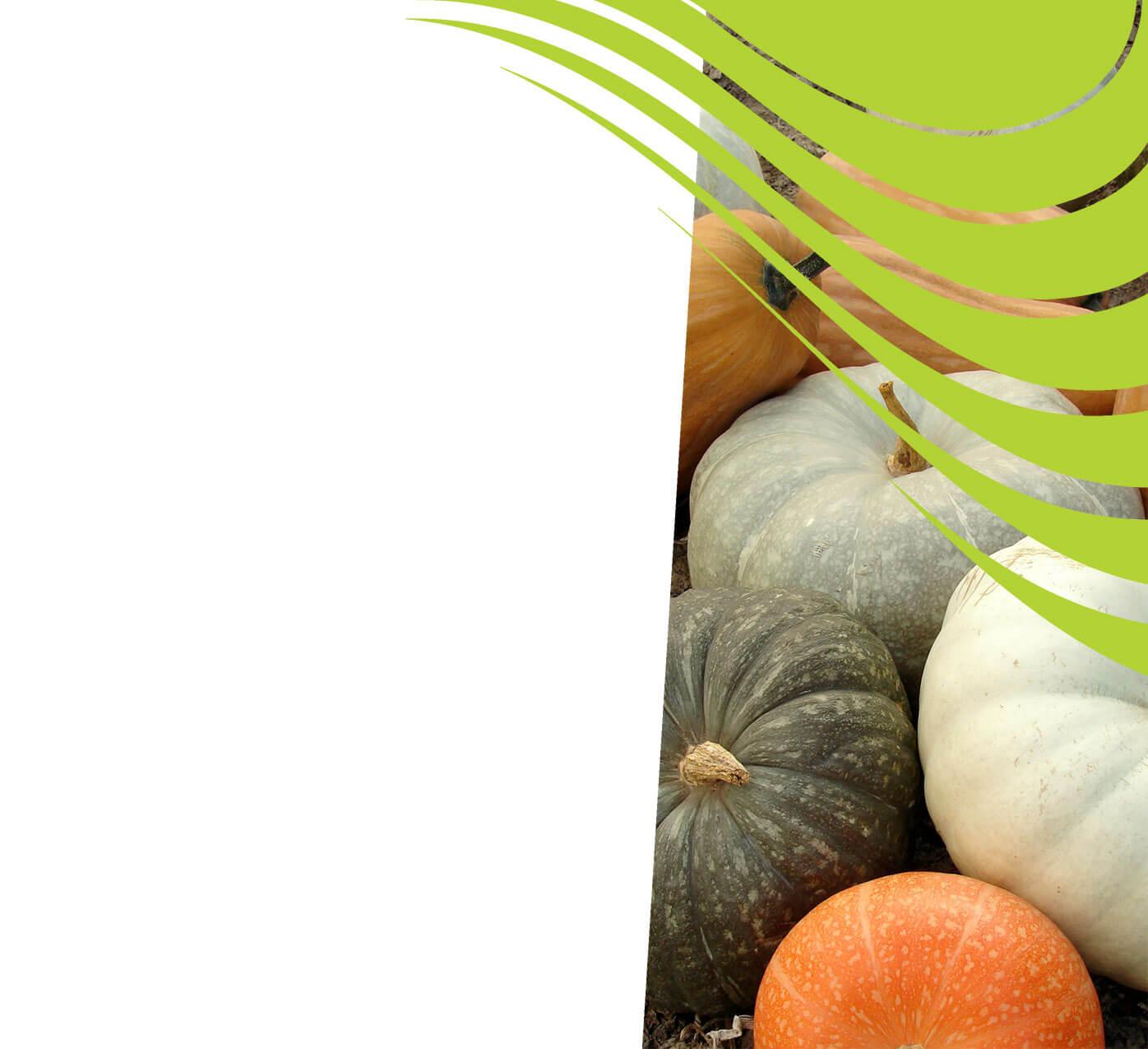 fertiliser for pumpkins