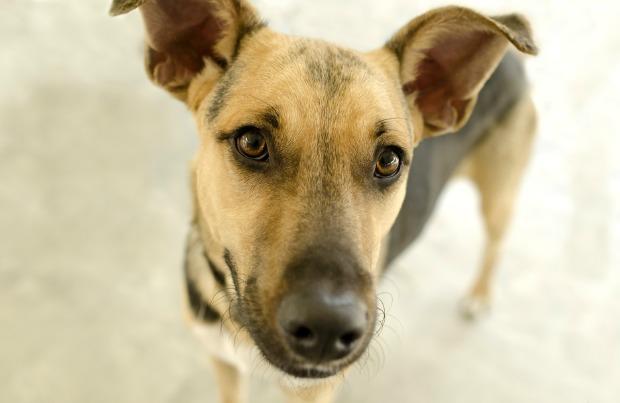 Cute shelter dog