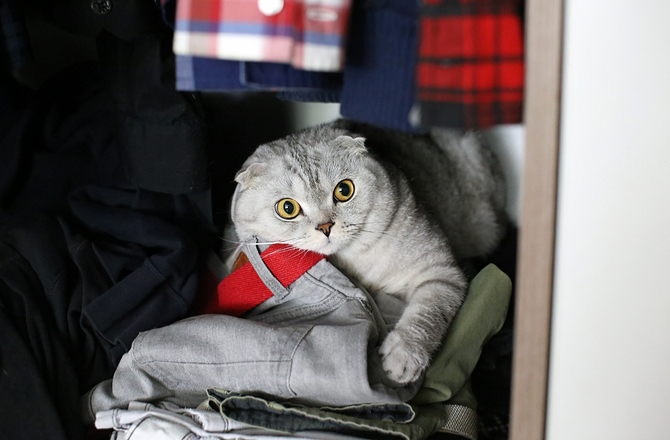 Cat hiding in closet