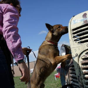 Trained dog from WD4C helping search