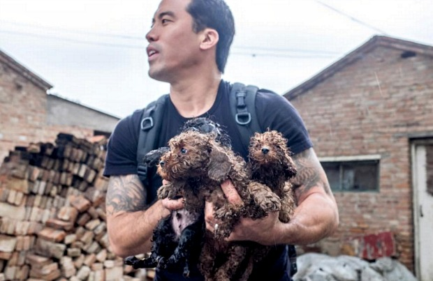 Marc Ching rescuing dogs from overseas