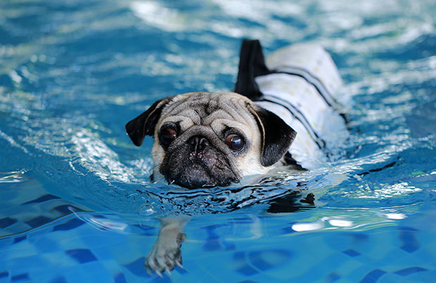 Dog vacation dangers: swimming