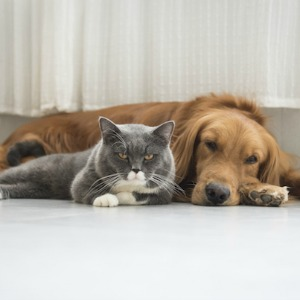 Cat and dog resting at home.