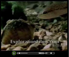 Evolutionism - Watch this short video clip