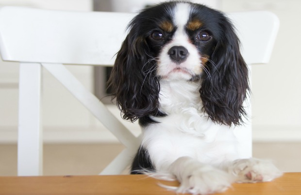 Four tips to stop your dog from begging