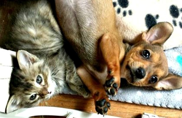 Puppy and kitten love each other