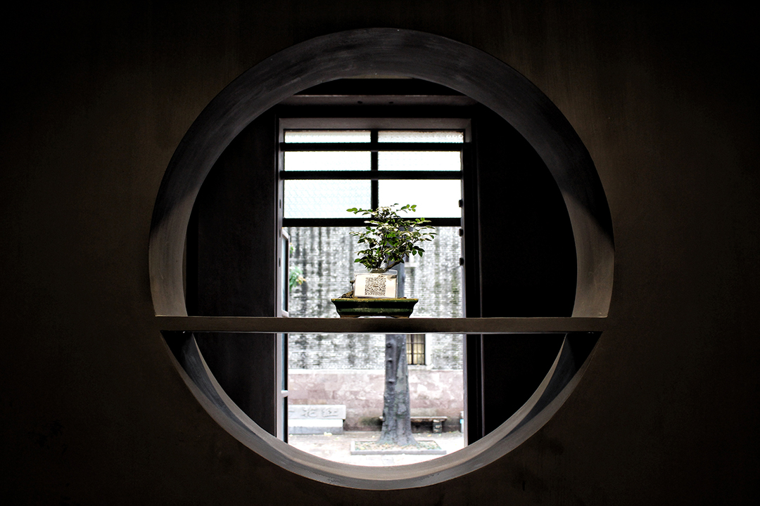 china15-bonsai.jpg