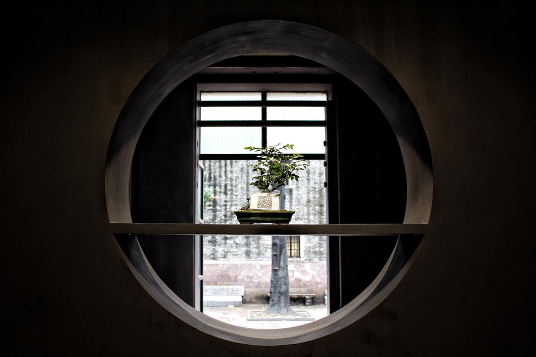 china15-bonsai.jpg