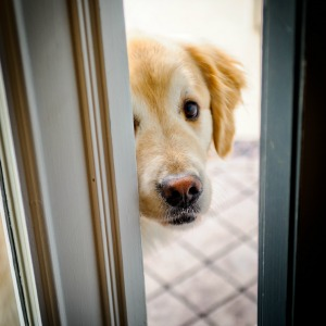 How to stop your dog from darting at the door