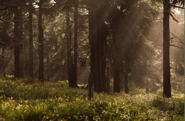 """Дачный городок «Княжий Хутор» расположился среди лесов первозданной природы Полесья в 72 километрах от Киева. Он находится на оптимальном удалении от трассы, как следствие - нет ни малейшего шума от транспорта. Комплекс со всех сторон окружен деревьями, а в трехстах метрах течет быстрая и чистая река Ирша. Городок """"Княжий Хутор"""" - это идеальное место для комфортного отдыха и здоровой жизни среди природы, для всей семьи."""