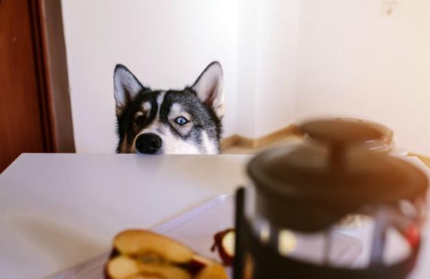 Weird pet fear: cooking