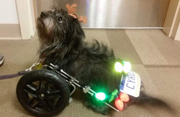 A therapy dog visits CHOP.