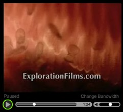 Evolution vs Creation - Watch this short video clip