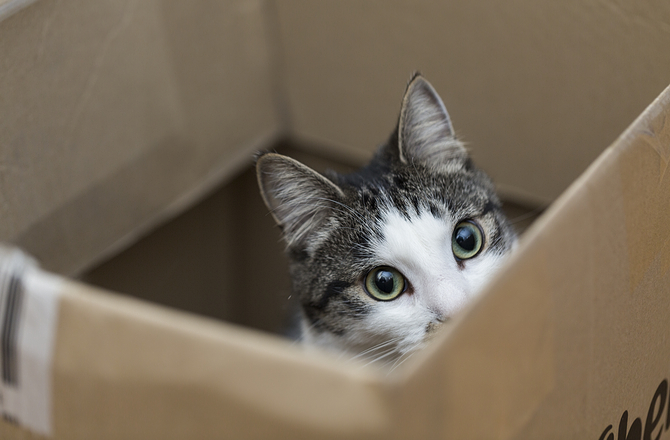 Cat hiding in box