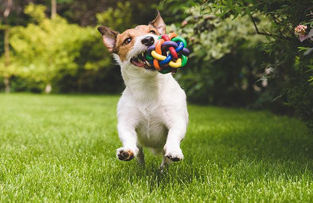 Dog-walking essentials: toys