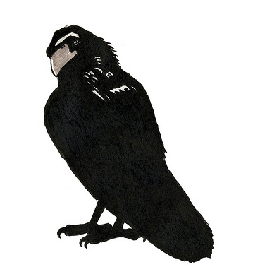 A stern-faced crow looking over its shoulder.