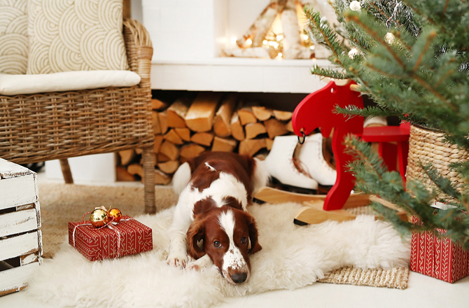 How not to neglect your pet during the holidays