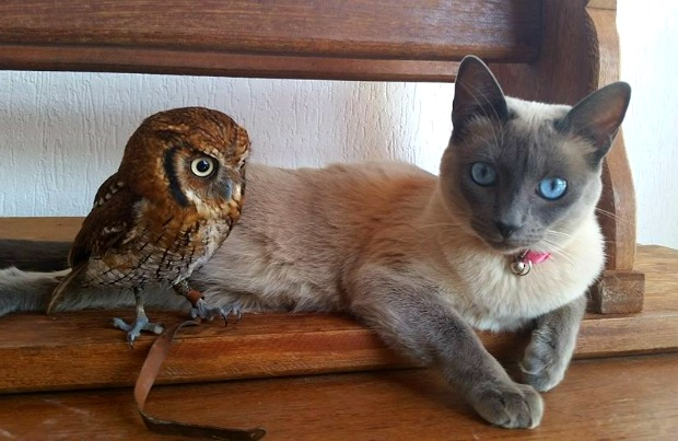 Forbi the cat and Cleo the owl